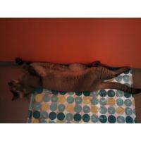 long cat momo